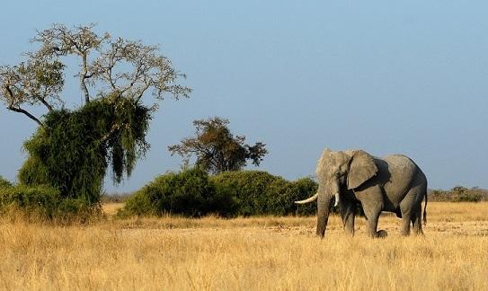 Safari Serengeti Vaste Plaine 1 elephant tanzanie
