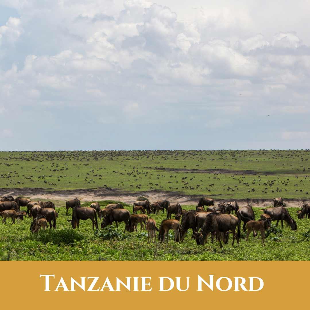 Tanzanie du Nord 1