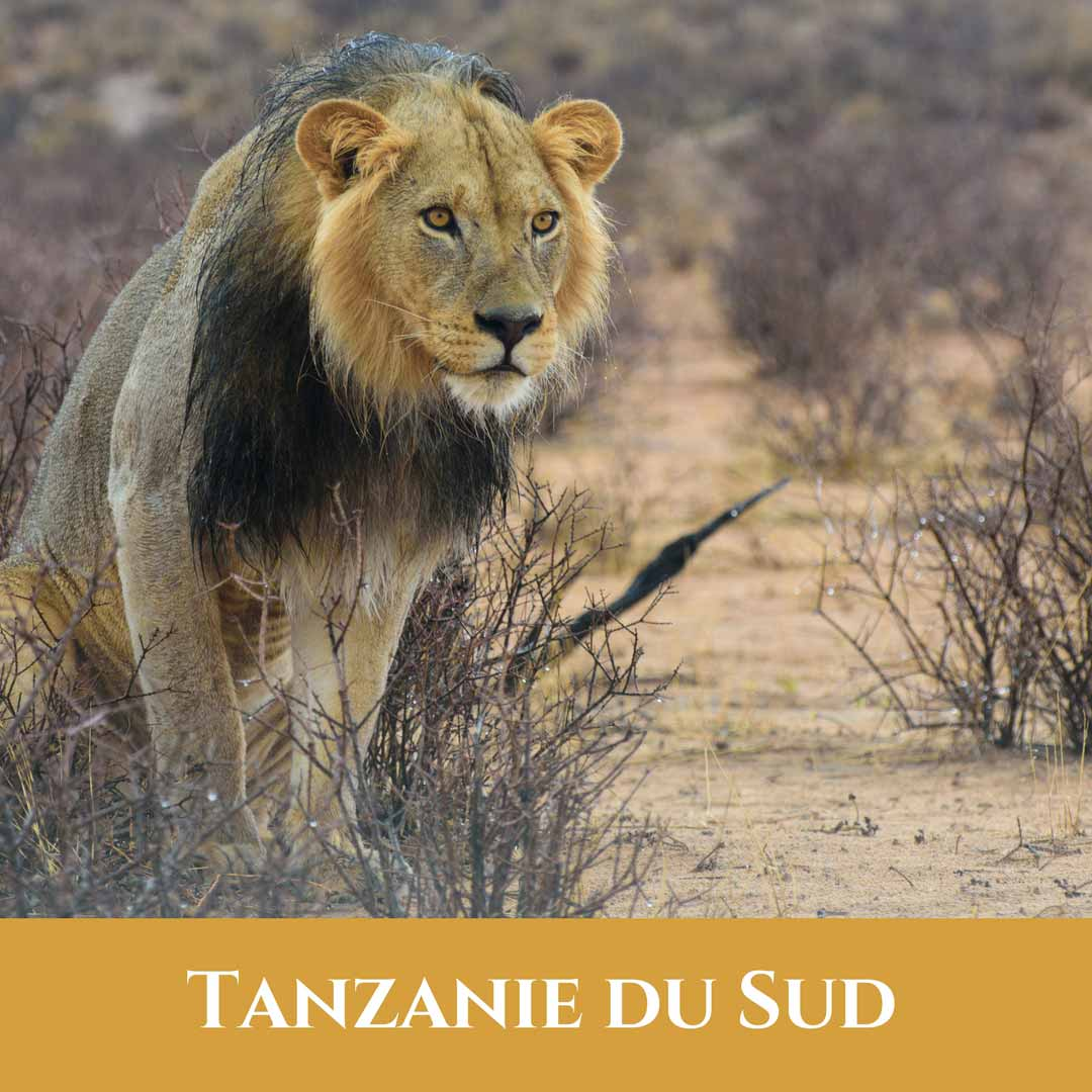 Tanzanie du Sud 2 Vignette Tanzanie du Sud20