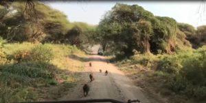 Safari Serengeti Vaste Plaine 1 Capture vidéo