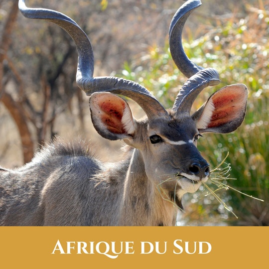 Voyages Afrique du Sud