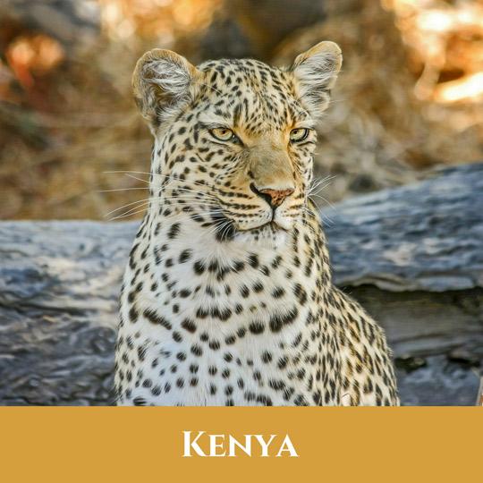 Voyages Kenya