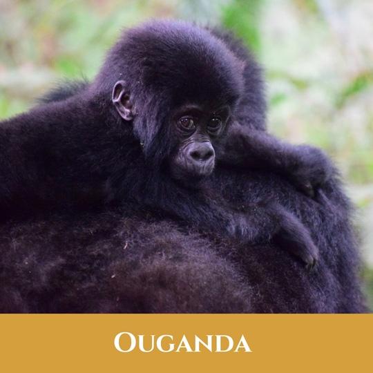 Voyages Ouganda
