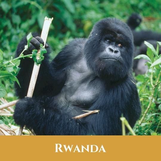 Voyages Rwanda