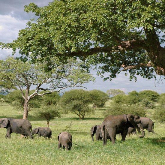 tanzanie-elephants