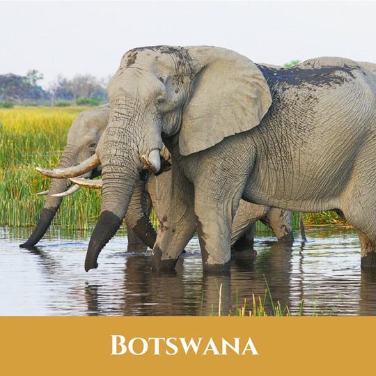 Voyages Botswana