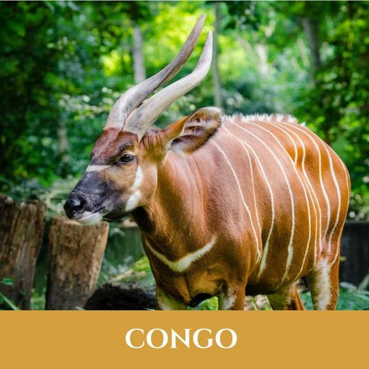 Voyages Congo