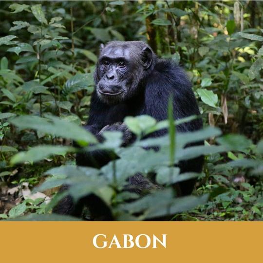 Voyages Gabon