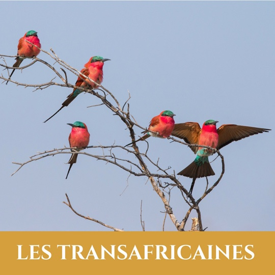 Voyages Transafricaines