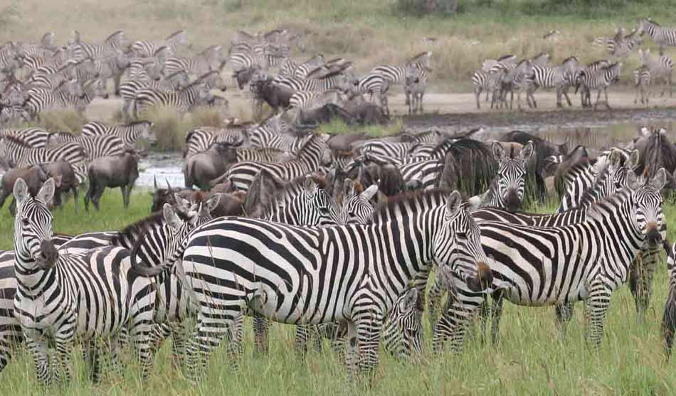 Safari Spécial Migration 4 tanzanie safari special migration1