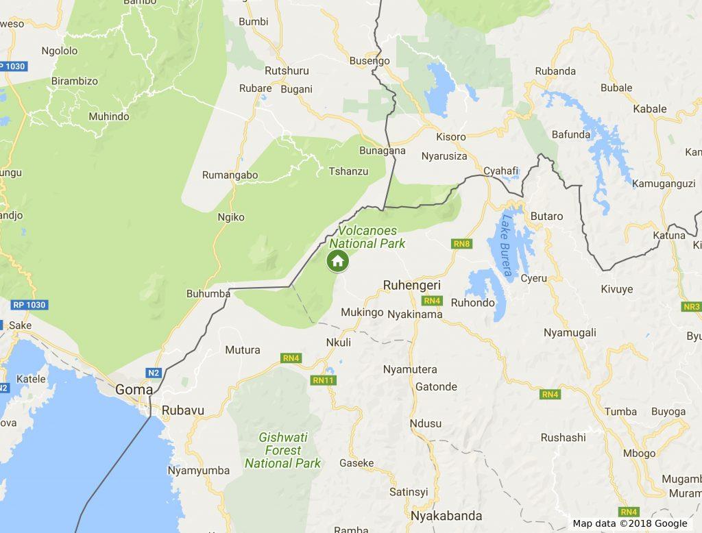Trekking Gorilles au Rwanda 1