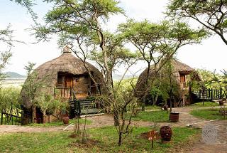 tanzanie serengeti serena lodge