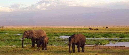 Voyages famille 8 kenya les neiges du kilimanjaro1