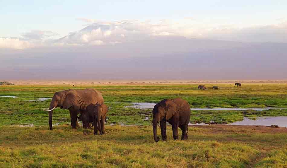 Kenya 3 kenya les neiges du kilimanjaro1