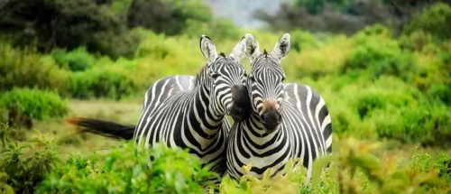 Voyages famille 6 kenya out of africa version charme1