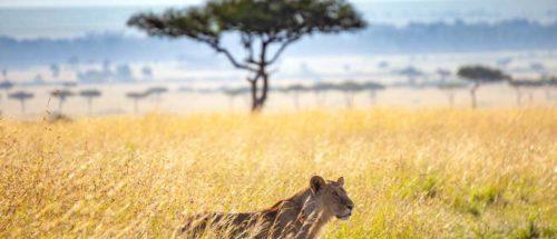 Voyages famille 5 kenya out of africa version sympa1