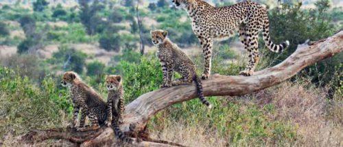 Séjours balnéaires 6 kenya safari plage petite escapade1