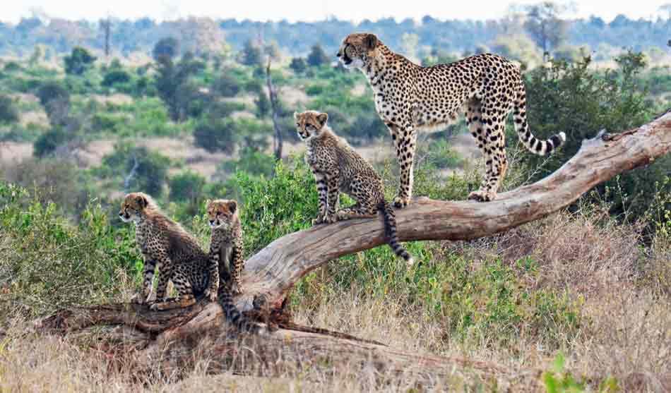 Kenya 5 kenya safari plage petite escapade1