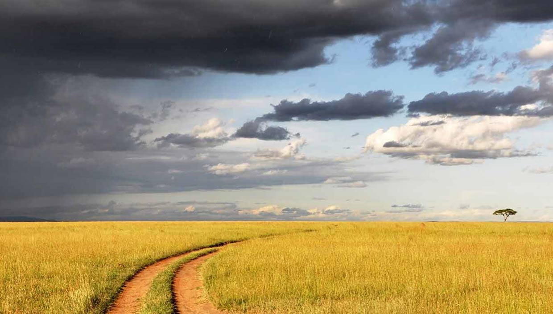 serengeti vie sauvage