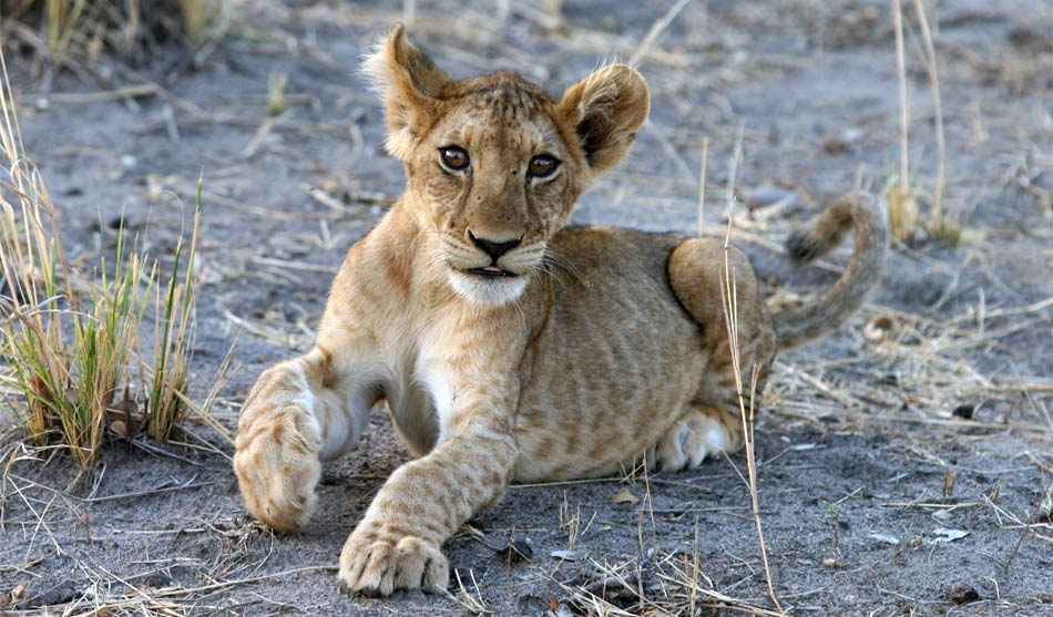 Tanzanie du Sud 1 tanzanie du sud safari mikumi ruaha selous route1 1