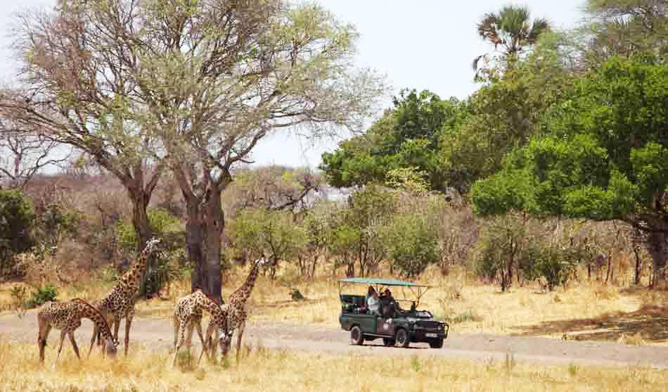 Tanzanie du Sud 2 tanzanie du sud safari ruaha katavi selous1