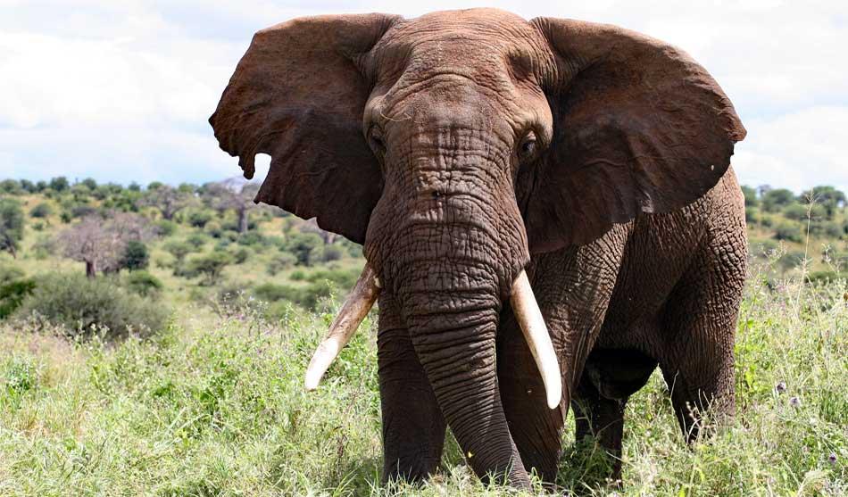 Safari Selous & Plage Sauvage à Saadani 4