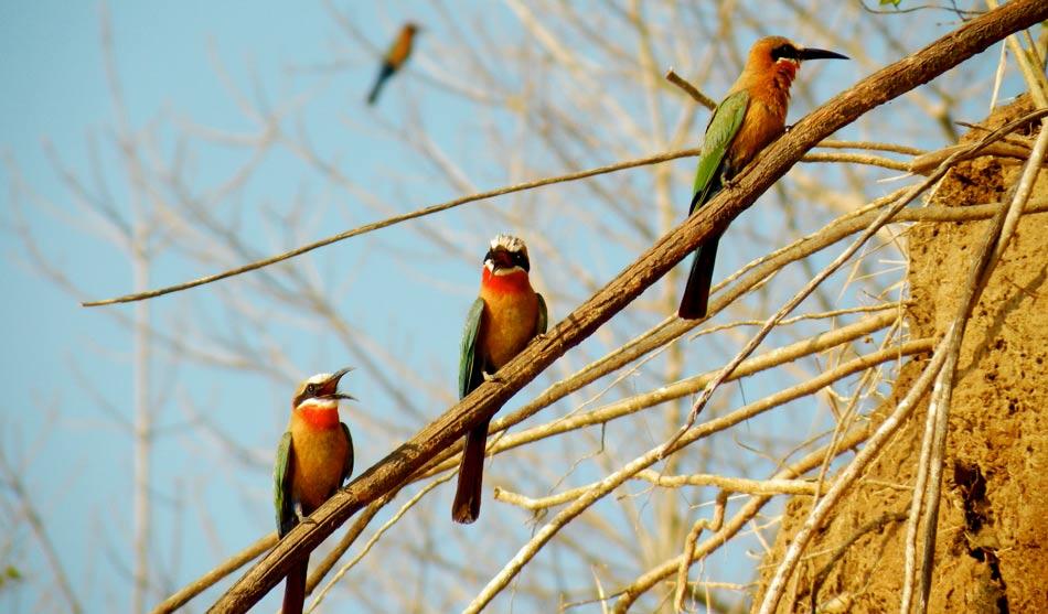 Tanzanie du Sud 3 tanzanie du sud selous ruaha charme1.1