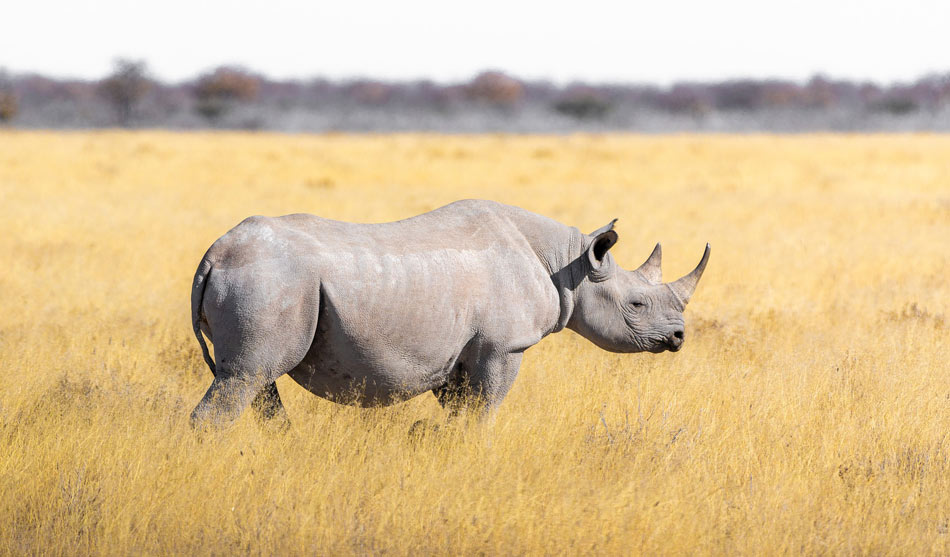 Afrique du Sud Autoroute 12 jours Wildlife