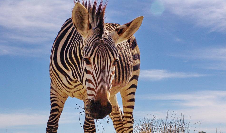Afrique du Sud Autotour 13 jours Kruger Limpopo Botswana
