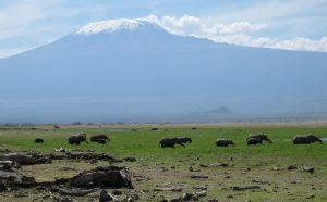 Les combinés Kenya-Tanzanie 1