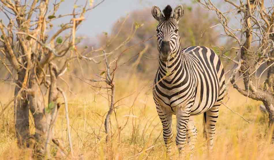 Botswana 4 botswana kalahari et okavango1