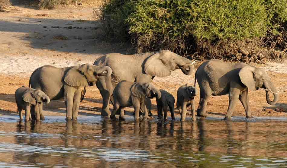 Botswana Pays des Eléphants camping