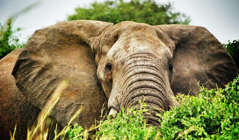 Botswana Safari à Pieds Okavango