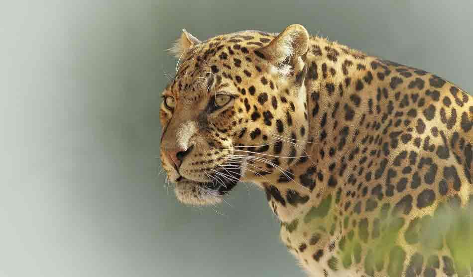 Botswana 8 botswana safari luxe1 3
