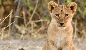 Zimbabwe 5 botswana zimbabwe safari lycaon1 1