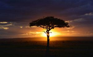 Les combinés Kenya-Tanzanie 3 combine kenya tanzanie aventure1