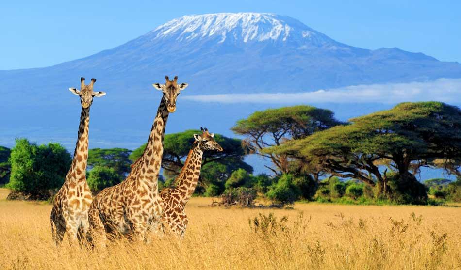 Les combinés Kenya-Tanzanie 1 combine kenya tanzanie kilimanjaro serengeti1 1