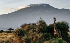 Les combinés Kenya-Tanzanie 1 combine kenya tanzanie kilimanjaro serengeti1