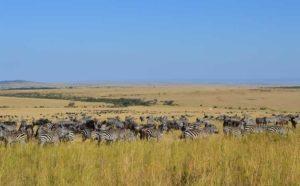 Les combinés Kenya-Tanzanie 2 combine kenya tanzanie mara tarangire1 1