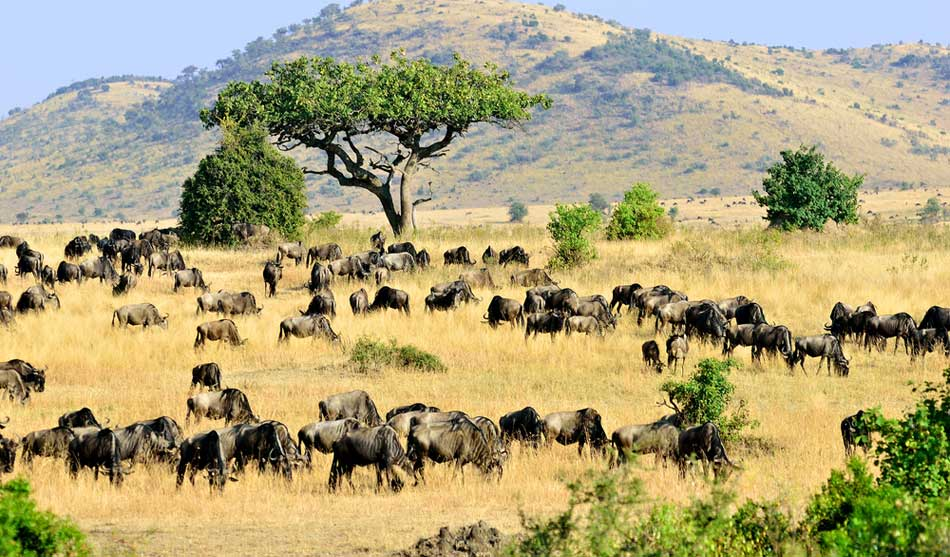 Les combinés Kenya-Tanzanie 2 combine kenya tanzanie mara tarangire1 2