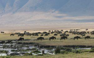 Les combinés Kenya-Tanzanie 3