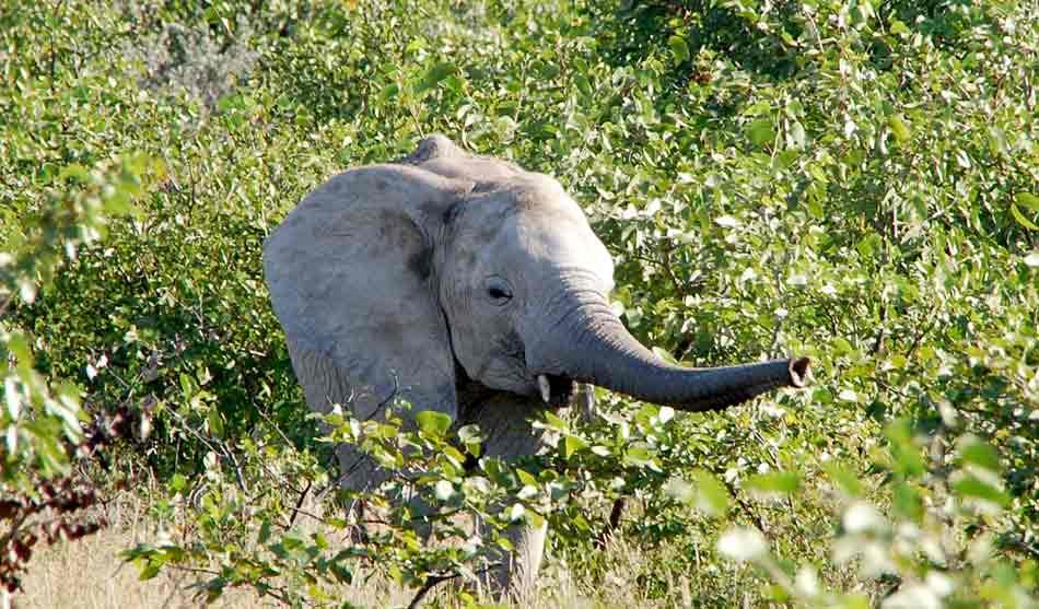 Botswana 12 namibie autotour 14 jours1