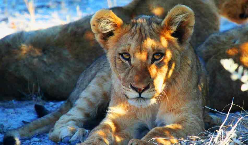 Namibie 3