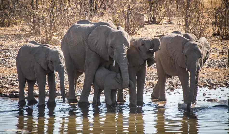 Namibie 11 namibie escapade namibienne1