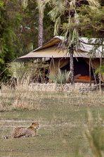 Chem Chem Safari Camp 15 tanzanie chem chem safaris camp14