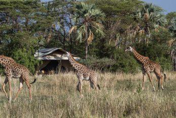 Chem Chem Safari Camp 7 tanzanie chem chem safaris camp8