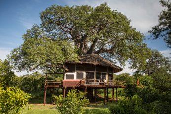 Tarangire Treetops Lodge 2 tanzanie elewana tarangire treetops7