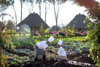 Neptune Ngorongoro Luxury lodge 11 tanzanie exploreans ngorongoro lodge11