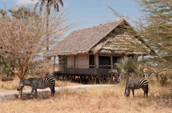 Maramboi Tented Camp 4 tanzanie maramboi tented camp4