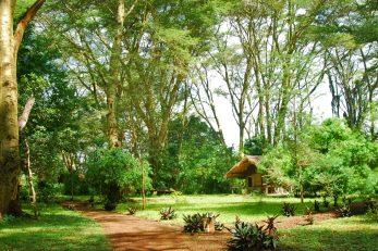 Migunga Tented Camp 3 tanzanie migunga tented camp2